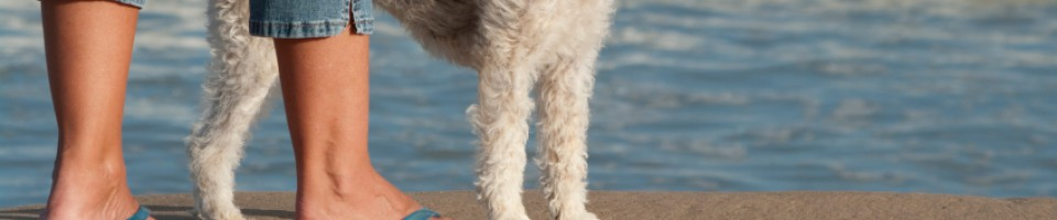 Two Legs and Four Homeopathic Health