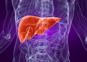 how to repair your liver